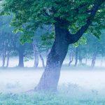 Kỹ thuật chụp ảnh sương mù