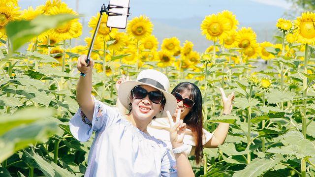 Vườn hoa hướng dương điểm checkin mới dịp hè tại Đà Nẵng